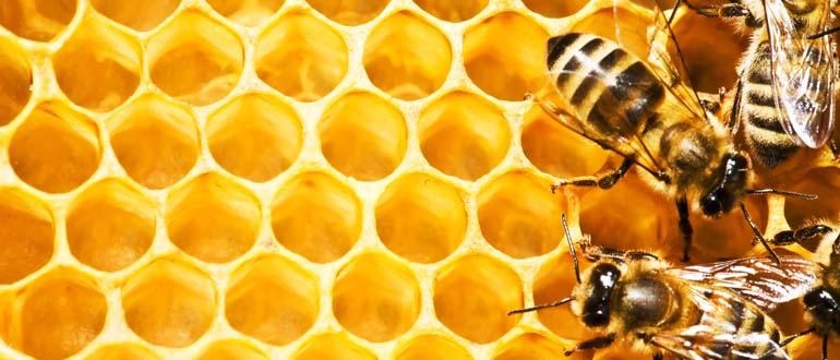 Les richesses de la ruche - La ruche a miel ...